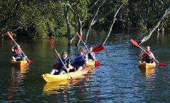 Kayak & SUP Guided Tour