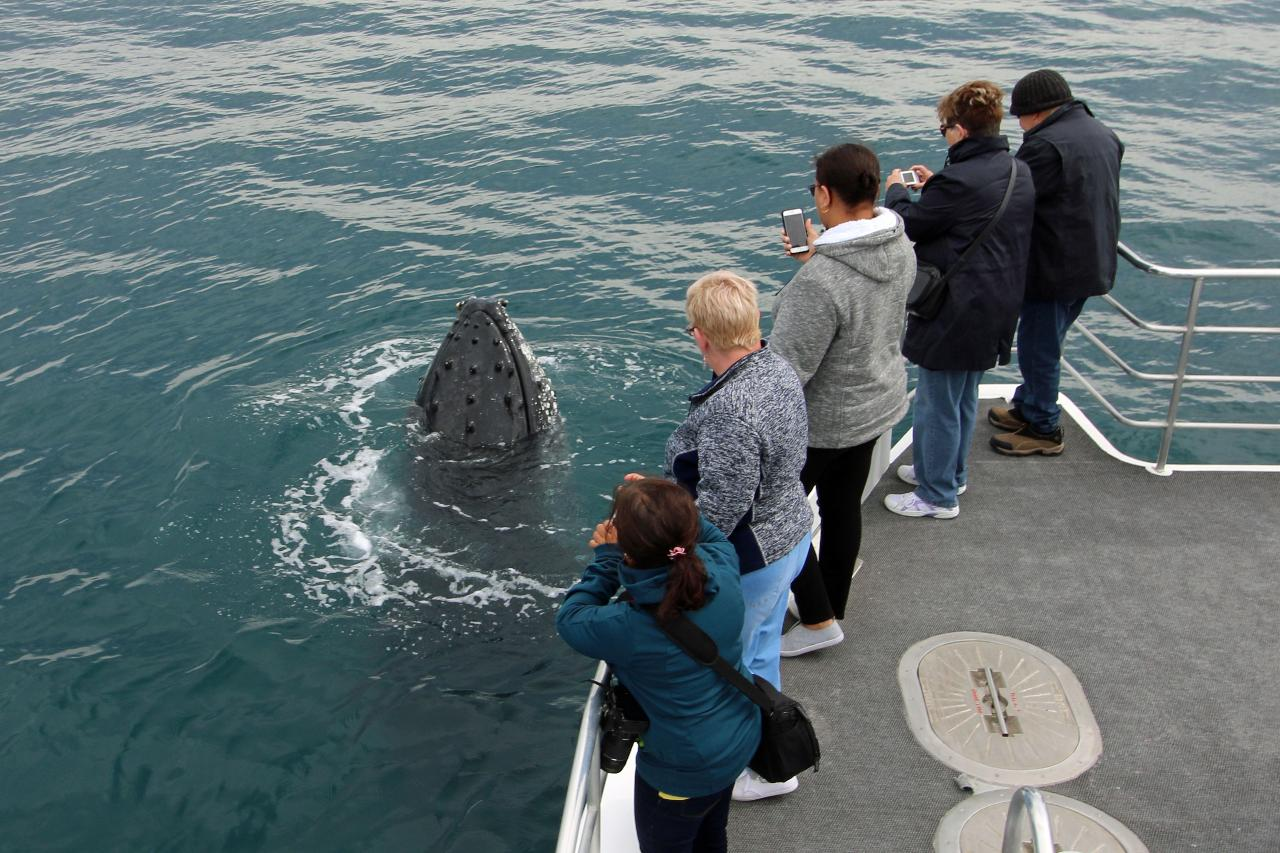 VIP Whale Watching Tour