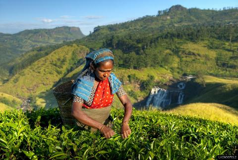Unique Journey to a Tea Plantation from Kandy