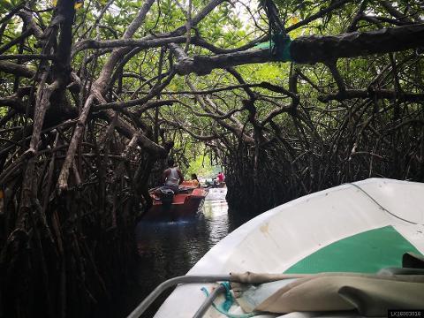 Madu Ganga Boat Safari