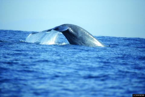 Whale Watching Tour in Mirissa