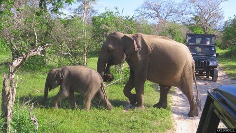 Yala National Park Safari From Hambanthota Port