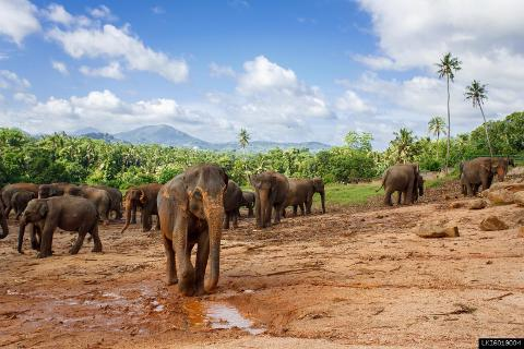 Pinnawala Elephant Orphanage from Kalutara