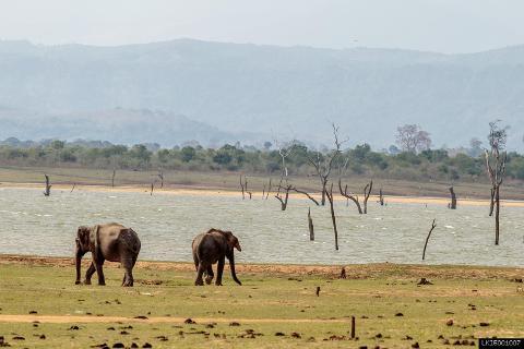 Udawalawe National Park Safari From Galle