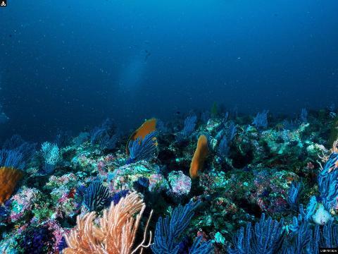 Snorkeling In Kalpitiya