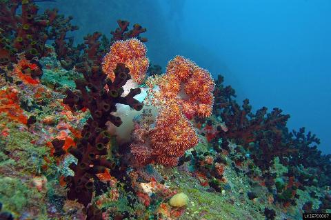 Snorkelling on the Hikkaduwa Coral Reef