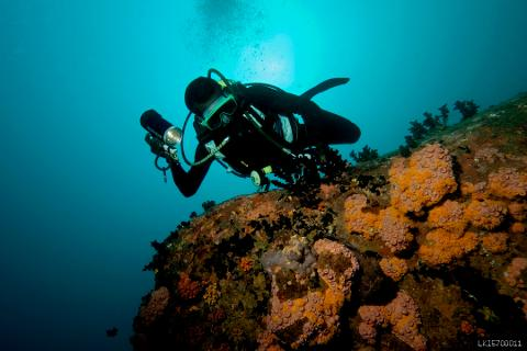 Diving on the Hikkaduwa Coral Reef - Beginner - 2 Dives