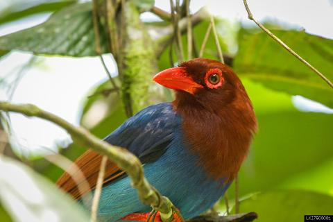 Trekking & Bird watching in Sinharaja Rain Forest (Private + Guided)