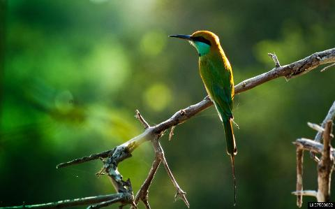 Muthurajawela Sanctuary Bird Watching tour from Colombo
