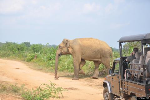 Udawalawe National Park Safari From Mirissa