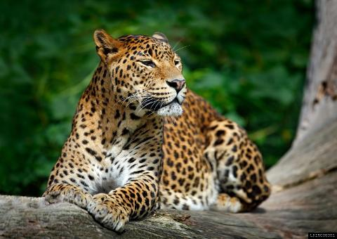 Wilpattu National Park Safari From Negombo