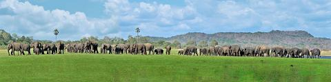Udawalawe National Park Private Safari (10 Hours)