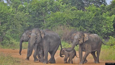 Udawalawe National Park Safari From Ahangama