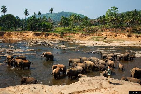 Pinnawala Elephant Orphanage from Bentota
