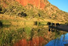 Uluru to Alice Springs via MacDonnell Ranges Kings Canyon Haasts Bluff Palm Valley Tours 8 Days
