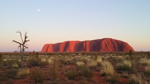 Uluru to Alice Springs via MacDonnell Ranges Kings Canyon Palm Valley Tours 5 Days