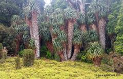 Tasmanian Wilderness Explorer 4WD Tours – 12 Day Tour