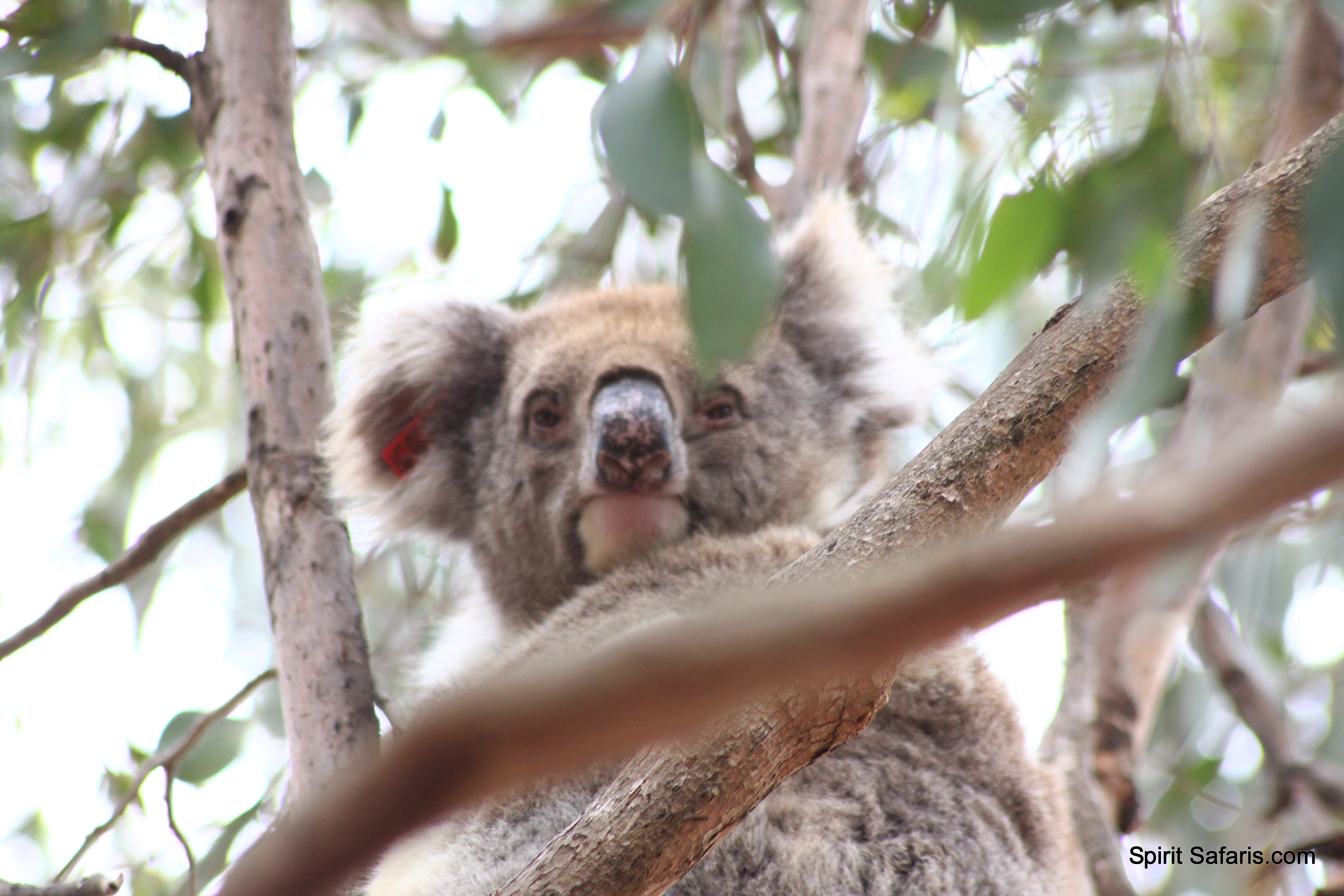 Kangaroo Island Tours from Adelaide 4 Days