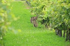 Hunter Valley Wine & Wildlife Tour 1 day