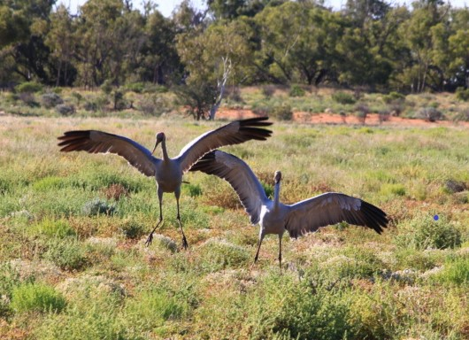 Channel and Corner Country Adelaide Broken Hill Innaminka Birdsville Alice Springs 12 Day Tour