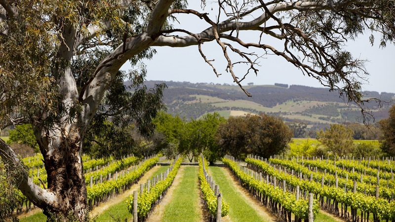McLaren Vale Winery Tour 1 day