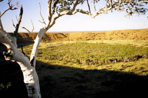 Tanami Track Broome to Alice Springs with Newhaven Wildlife Sanctuary tour 6 days