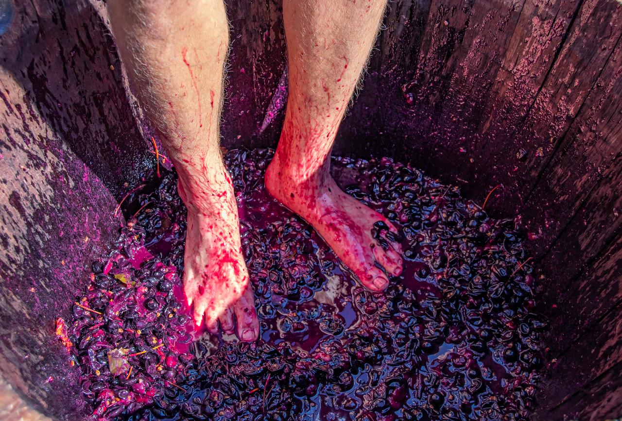 2020 City Winery Vintage Membership