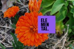 Elemental AKL – 'Garden Of Food Tour & Lunch'