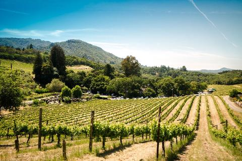Private Wine Tasting Excursion in Sonoma County
