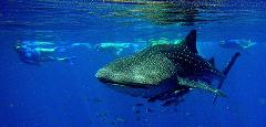 Whaleshark + Wonder Tour