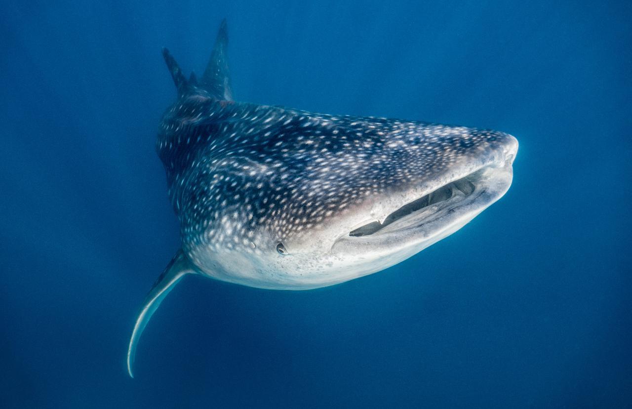 Whaleshark Tour Gift Voucher