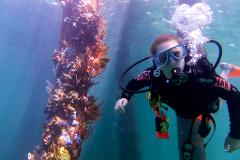 Dive Busselton Jetty