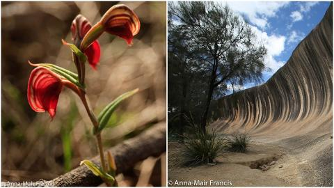 Wave Rock and Spring Flowers