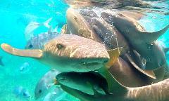 Hol Chan & Shark Ray Alley Snorkel