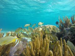 1-Tank Dive Hol Chan & Shark Ray Alley Snorkel