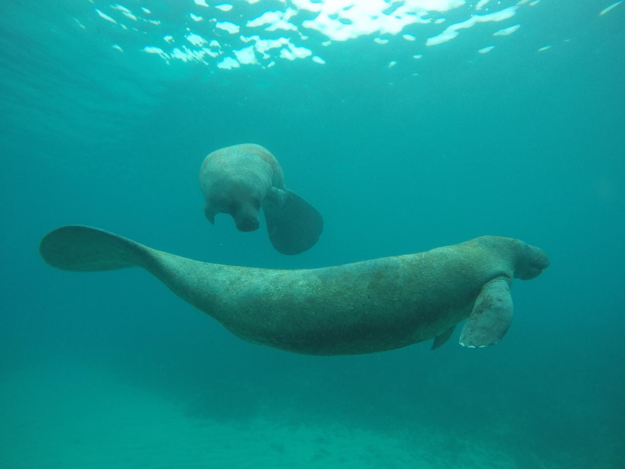 Caye Caulker All Day Snorkel