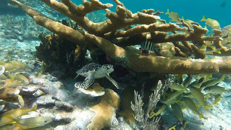 Coral Reef Experience Tour