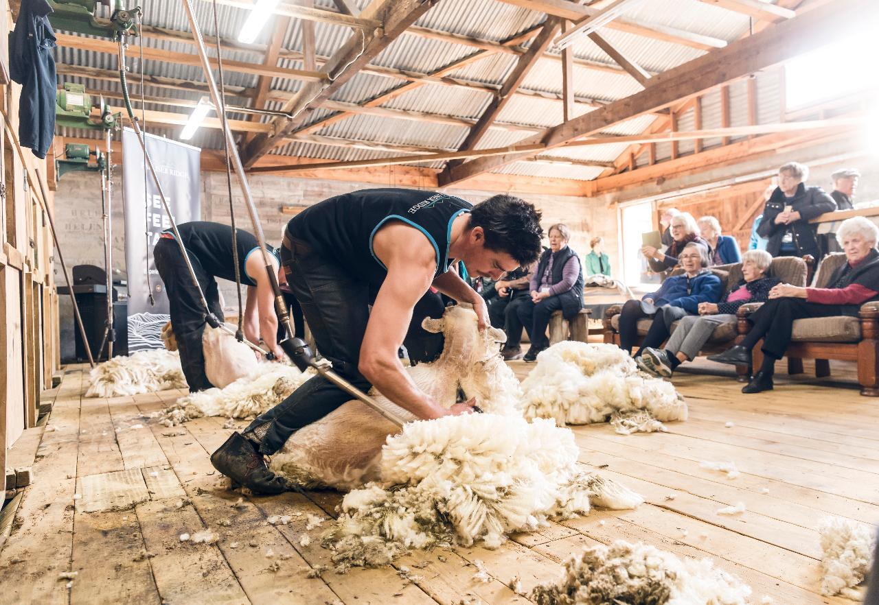 Palliser Ridge Farm Experience   Large Groups