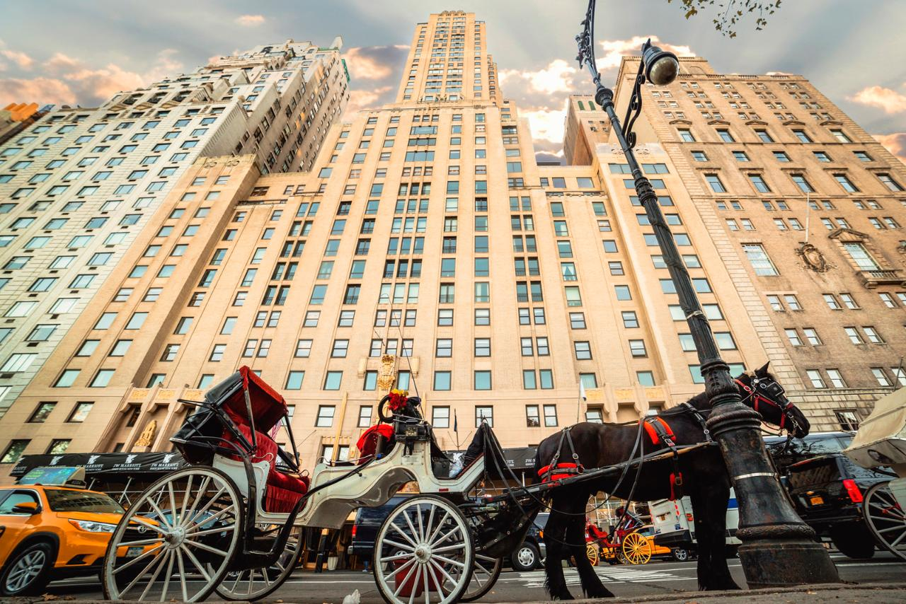Central Park Horse-Drawn Carriage Tour photo 2