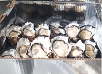 12 SHUCKED (OPEN in a half shell) OYSTERS