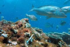 Abrolhos Fishing Charters