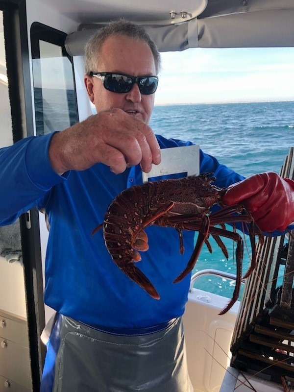Premium Rock Lobster Experience Tour