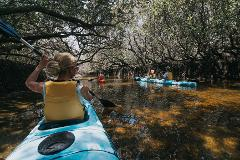 Dolphin Sanctuary  Guided Eco Kayak Tour- Includes Return Transfers