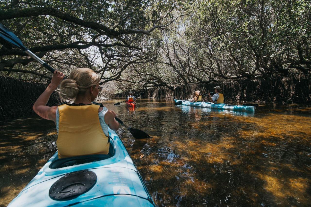 Dolphin Sanctuary Eco Kayak Tour - Self Guided Single Kayak