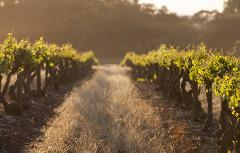 Luxe tour du vin - Private luxury full-day Canberra food and wine tour