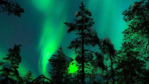 AURORA HUNTING TRIP WITH REINDEER SLEDDING