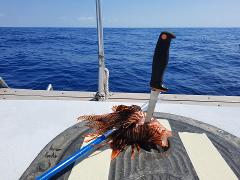 PADI Lionfish Removal Specialist Course @ Dive Key West