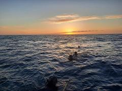 Key West Night Dive Trip