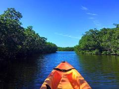 Kayak Mangrove Cathedral Canopy EcoTour @ Castaways