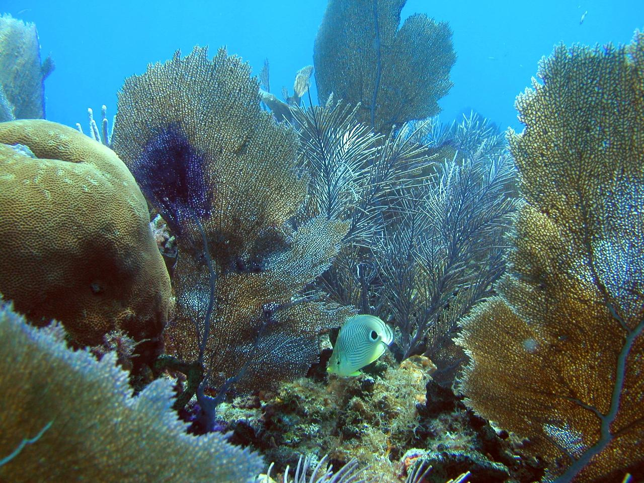 Key West Snorkel Trip